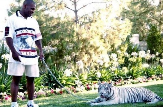 Mike-Tyson-Pet-Tigers-Where-are-They-Now